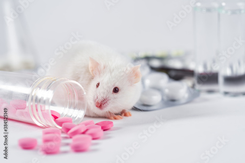 Cuadros en Lienzo A live white laboratory experimental mouse sits on pills.