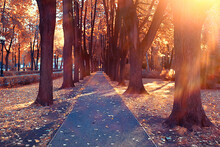 Path Autumn Park / Autumn Landscape, Yellow Park In Autumn Trees And Leaves, A Beautiful Sunny Day In The City Park. The Fall
