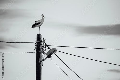Papel de parede Stork stays on the electric pole