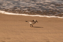 Seagulls And Birds At The Beach