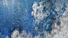 Frost On Trees In River Valley...