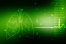 Healthy Human Lungs 2d Illustr...
