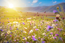 Wild Flowers Field In Sunlight In Summer
