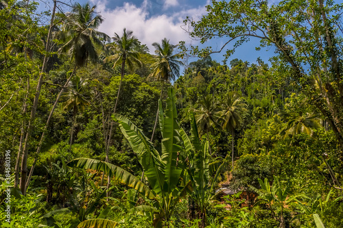 Photo A view of the dense jungle from the Kandy to Columbo main line railway in Sri La