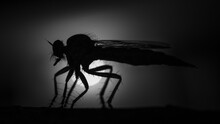 Silhouette Of A Insect