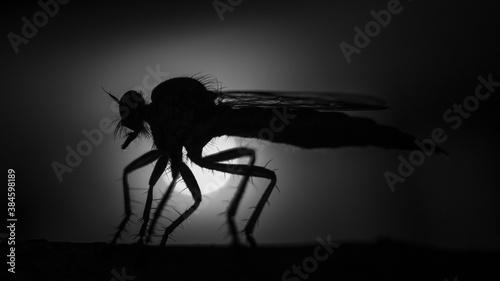Fotografia silhouette of a insect