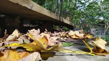 Autumn Riverside Scene With Dry Leaves Falling Over Wooden Outdoor Stairs