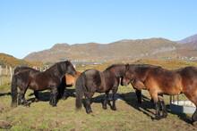 Horses Enjoying The Sun On Lof...