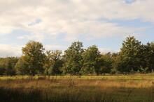 Beautiful Forest Landscape Wit...