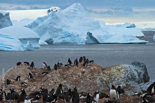 Leinwand Poster Penguin breeding colony in Antarctica