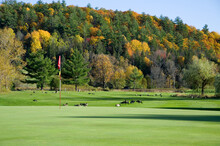 Red Golf Flag With Canadian Geese And Autumn Colored Mountains
