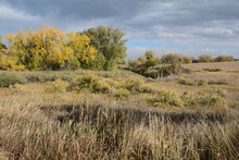 Colorado Autumn Landscape With Yellow Autumn Trees And Dry Autumn Prairie Grasses
