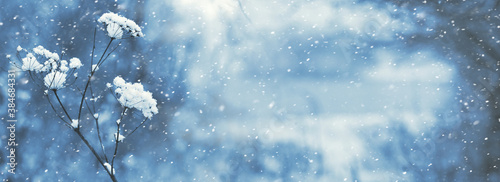 Fotografie, Tablou Winter background with a snow-covered dry branch on a forest background during a
