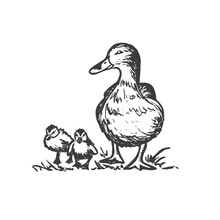 Duck With Ducklings. Vector Hand Drawn Sketch Style Illustration.