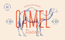 Camel. Template Label. Vintage Retro Print, Tag, Label With Camel Drawing, Engraved Old School Style. Poster With Text Racing Sport, Typography, Camel Silhouette. Vector Illustration