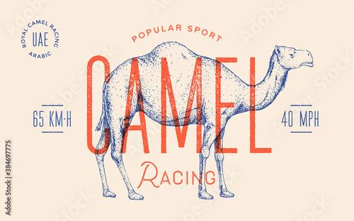 Foto Camel
