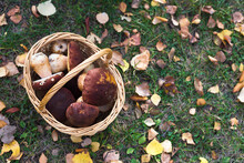 Basket With Mushrooms In A For...