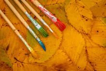 Five Brushes For Painting On Colorful Autumn Leaves Background