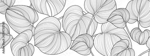 Luxury Nature Black and White background vector. Floral pattern, Ssplit-leaf Philodendron plant with monstera plant line arts, Vector illustration.