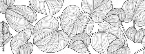Obrazy białe  luksusowy-charakter-czarno-biale-tlo-wektor-kwiatowy-wzor-roslina-filodendron-o-lisciach-dzielonych