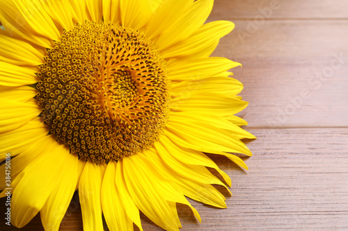 Fototapeta Beautiful bright sunflower on wooden background, closeup obraz