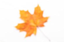 Colorful Unfocused Maple Leaf ...