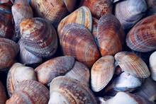 Seashells On The Market