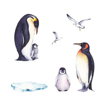 Set Of Watercolor Illustrations: A Family Of Penguins, Gulls And Ice Floes. It's Perfect For Winter Design