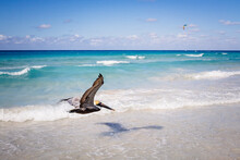 Pelican Flying Over The Beach