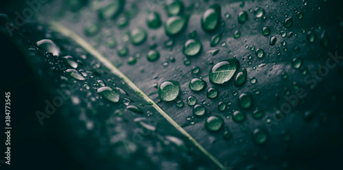 green leaf with droplets splash on surface, purity nature background Canvas Print