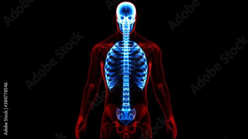 Human Skeleton System Axial Skeleton Anatomy Canvas Print