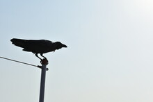 A Crow Just Ready To Fly In The Blue Sky