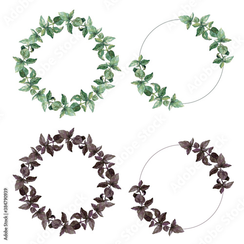 Leinwand Poster Four wreaths of green and purple basil twigs and leaves isolated on white