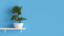 Bonsai Tree In Front Of Blue Wall With Space For Posters