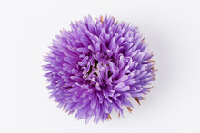 Violet Aster Flower Isolated O...