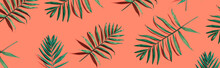 Tropical Palm Leaves From Above - Flat Lay