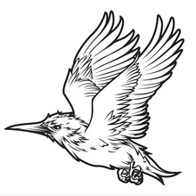 Birds Annimal Wing Drawing Vector Icon Logo Vintage  Illustration 1