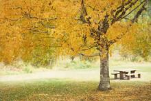 Original Textured Autumn Photo...