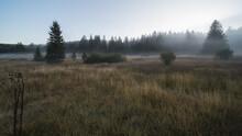 Moor Landscape In The Fog In T...