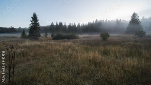 Fotografia moor landscape in the fog in the landscape protection area The nature reserve Ki