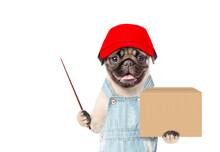Pug Puppy Wearing A Red Cap  A...