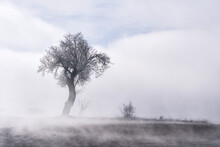 Tree With Fog In Winter