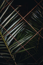Palm Leaves Behind A Fence