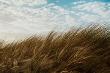 Beach Grass On A Sand Dune