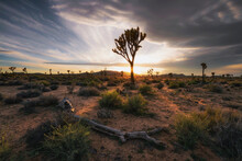 Sunset At Joshua Tree National...
