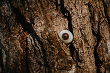 A Tree Is Watching You