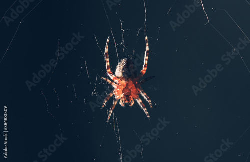Garden Spider in the Middle of the Web Canvas Print