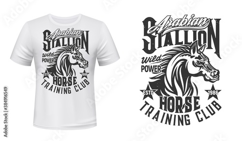 Fototapeta Horse training, equestrian club t-shirt vector print. Arabian stallion head with waving mane engraved retro illustration and grungy typography. Horse riding club apparel custom design print mockup obraz