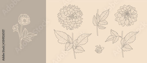 Fotografija Set Dahlia Flowers with Leaves in Trendy Minimal Liner Style