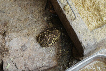 Toad Toad At The Feed